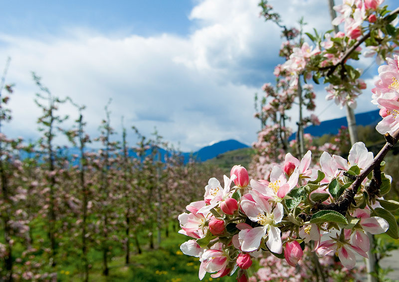 Riederhof Frühlingsangebot