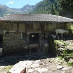 Hauswanderung zur Fartleisalm (Prantacheralm)