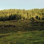 Hauswanderung zur Ulfas Alm